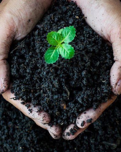 خاک مصرف